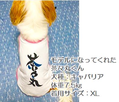 名前入り犬服